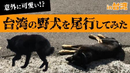 台湾の野良犬、優しい野犬